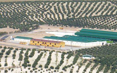 Pasión por los olivos